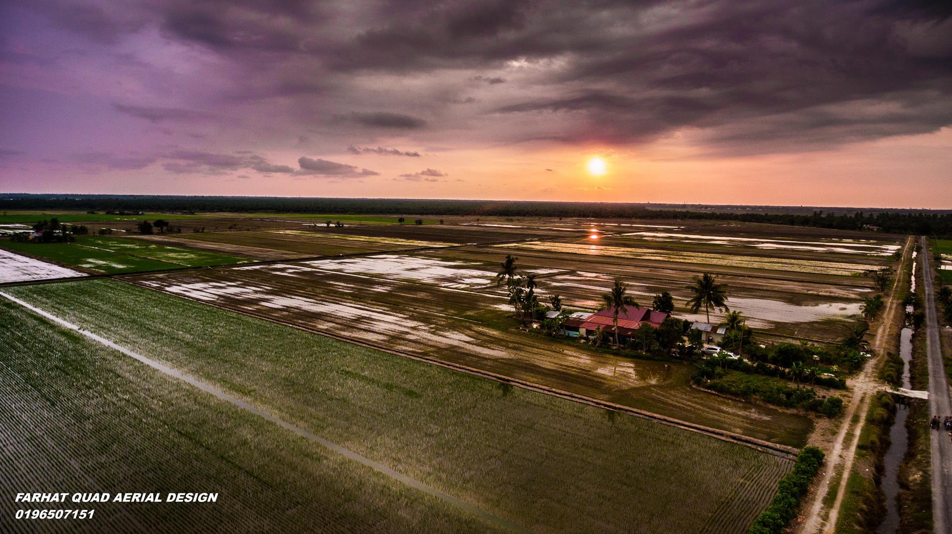 Permandangan sawah aerial fotografi